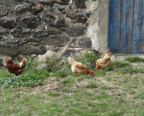Gites en Ardèche du Sud - Le Vallon des Etoiles
