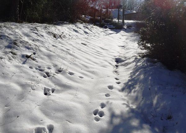 en ardèche-neige-vallon des etoiles